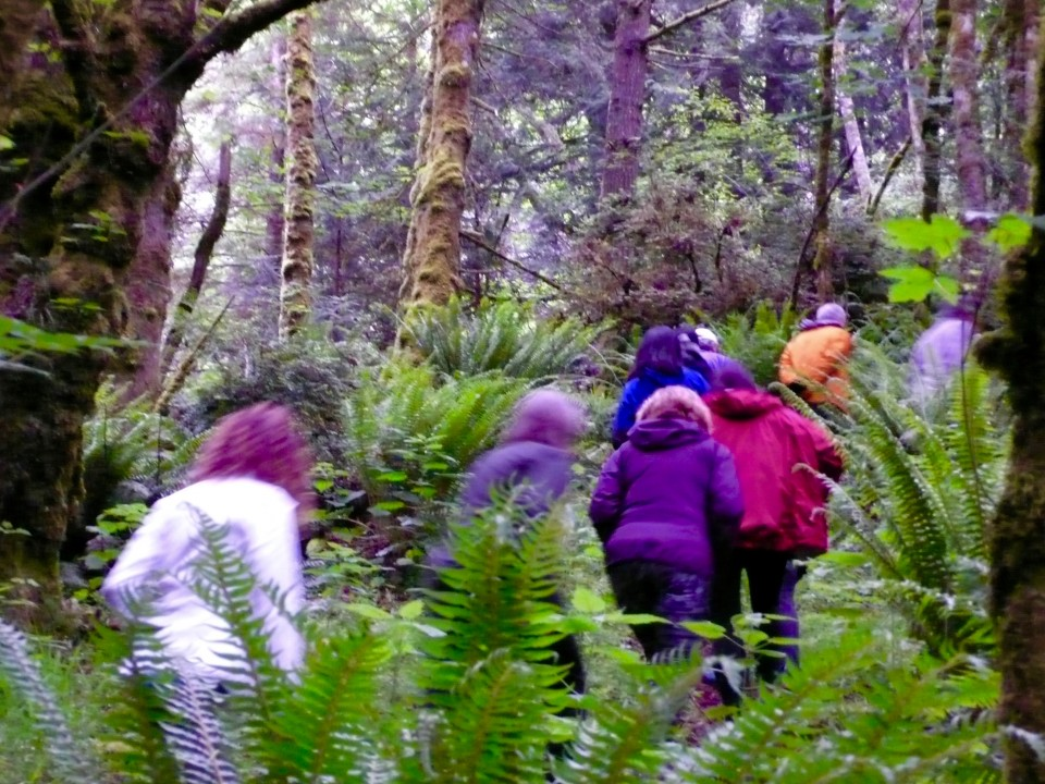 Blurred, Action-Packed Hiking photo in the thick of the rain forest