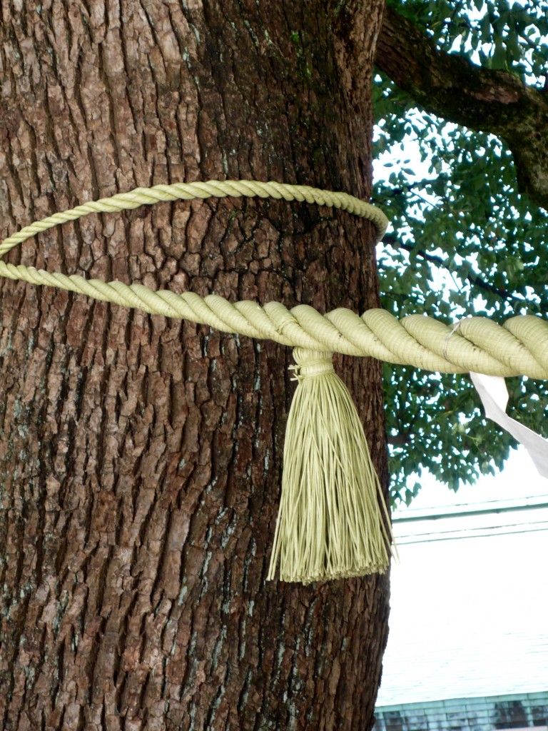 Shrines are Shinto (not Buddhist) In Shintoism, trees are sacred because they embody the spirit of the gods. There are two camphor trees tied together (this is one of the trees) and they represent a symbol of happy marriage and harmonious life.