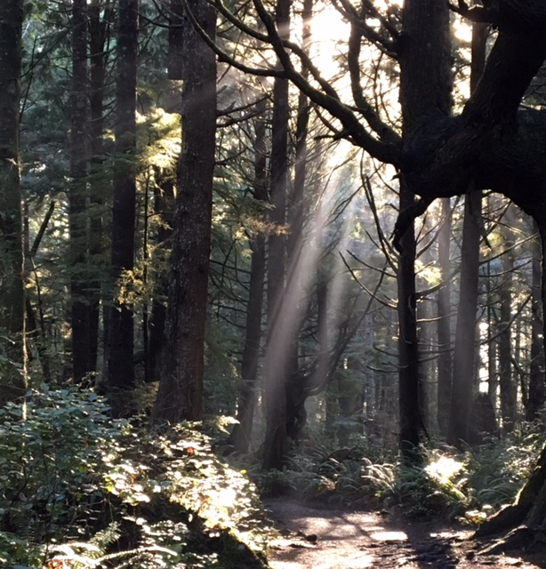 Rays of sunlight spill into the forest trail on our hike