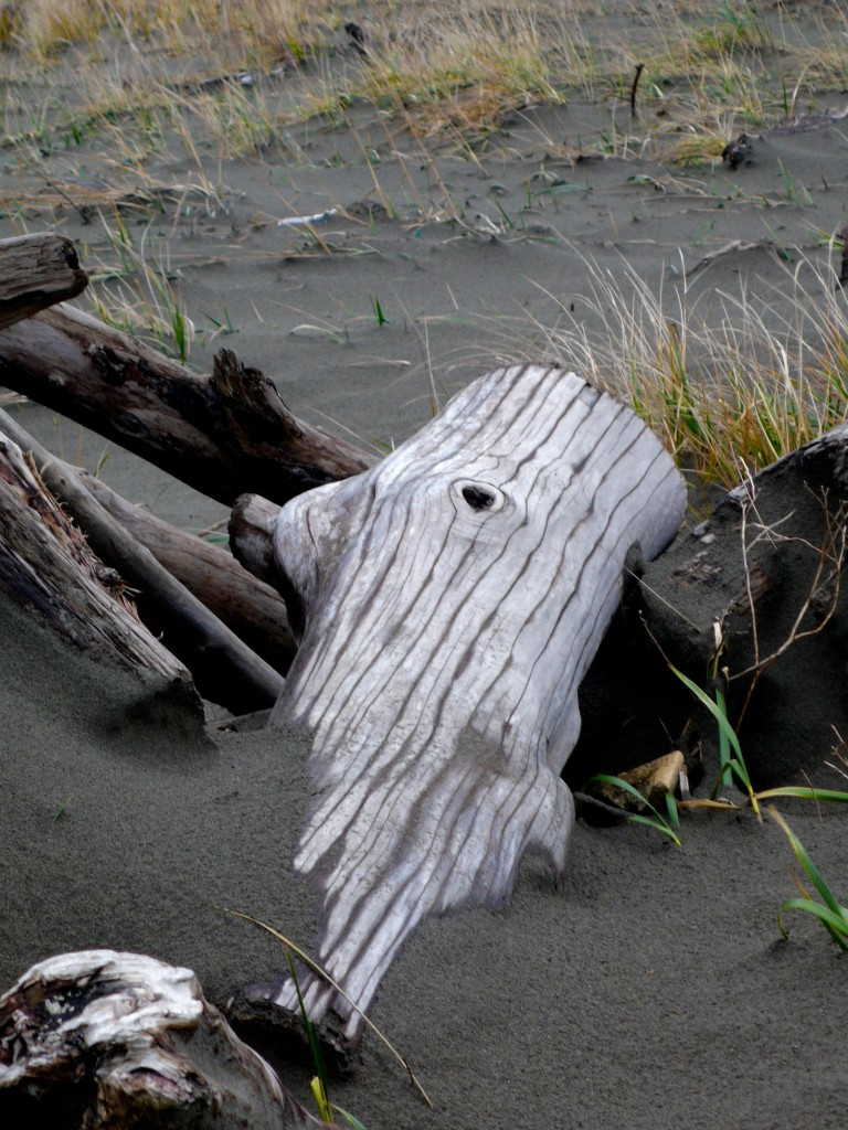 Pretty driftwood log