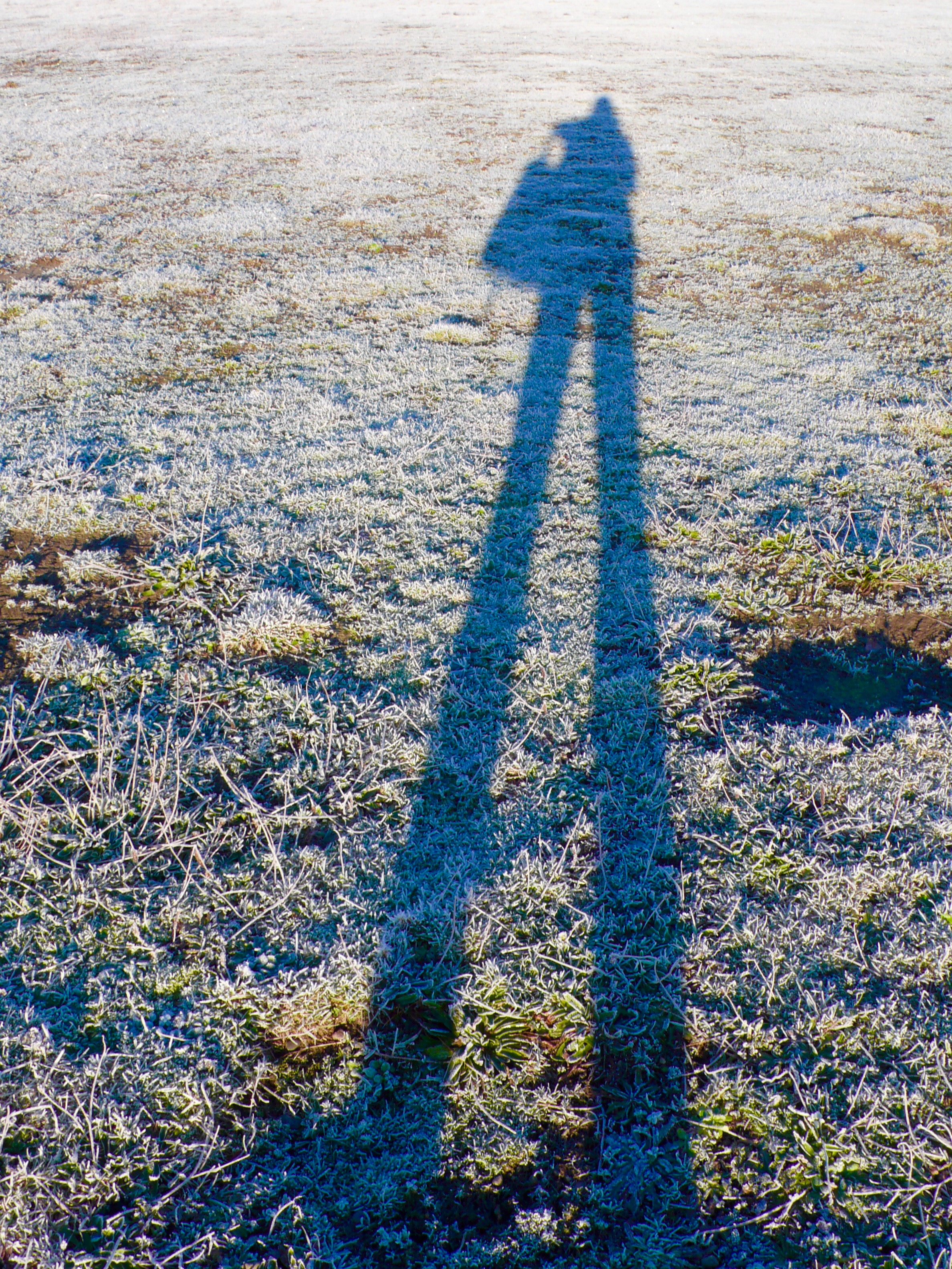My Winter Long Shadow against the frosted grass