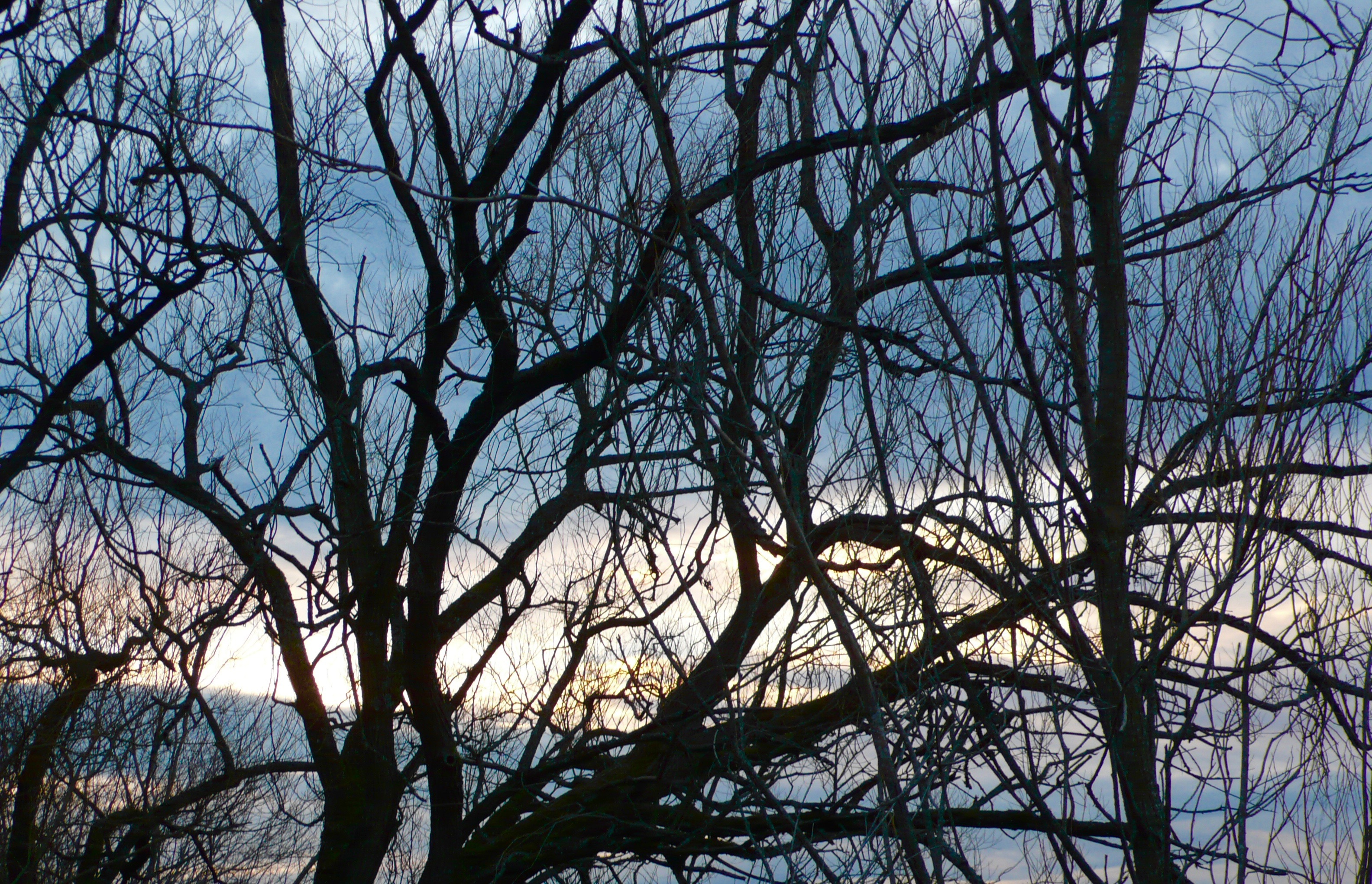 Bare Trees and Winter Sky