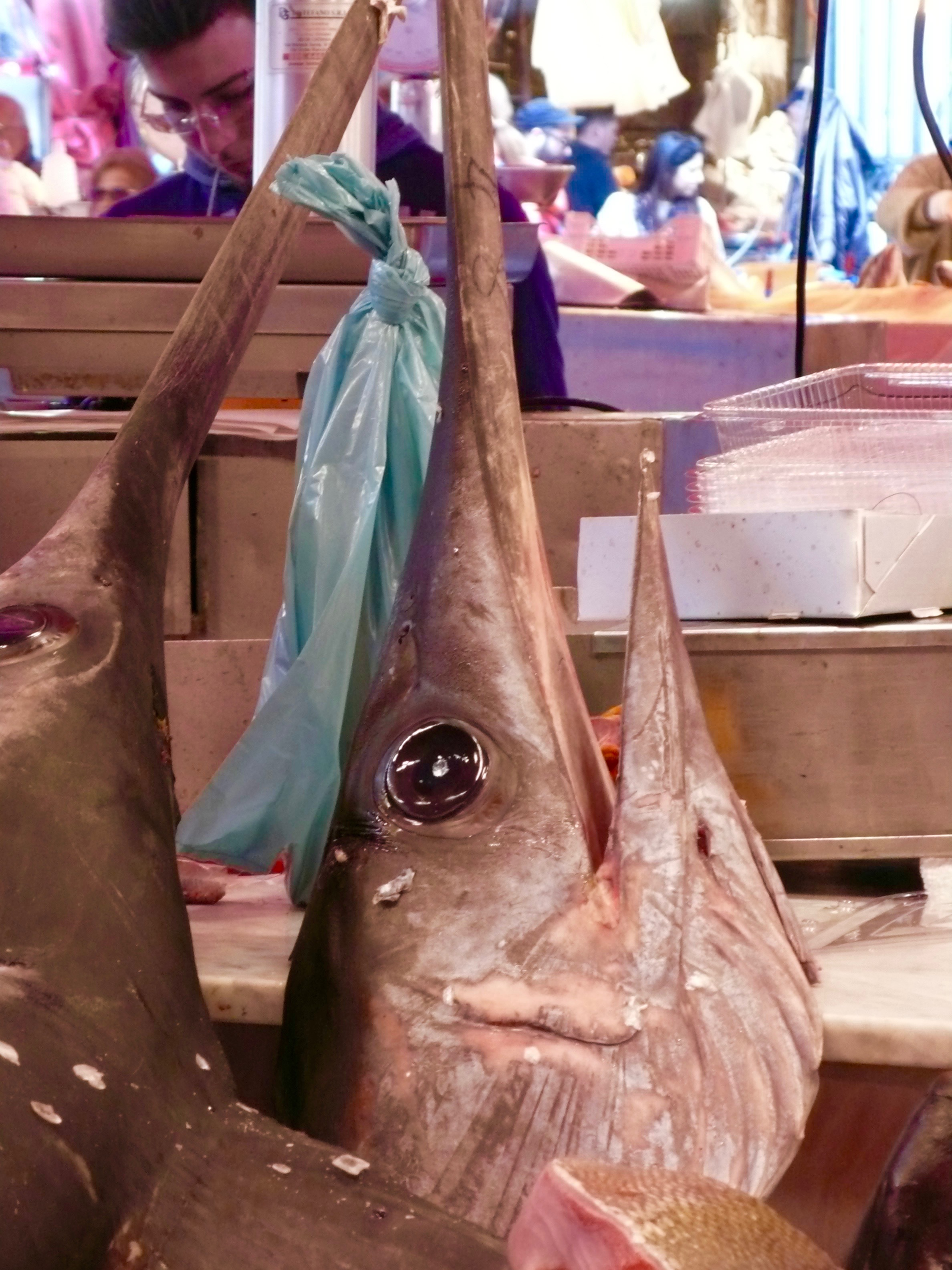 Enormous Pesce Spada (Sword Fish) in the Catania fish market