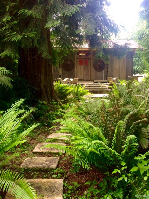 Path leading to the house where we do our yoga