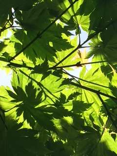 Leaves and Light (photo by Milo)