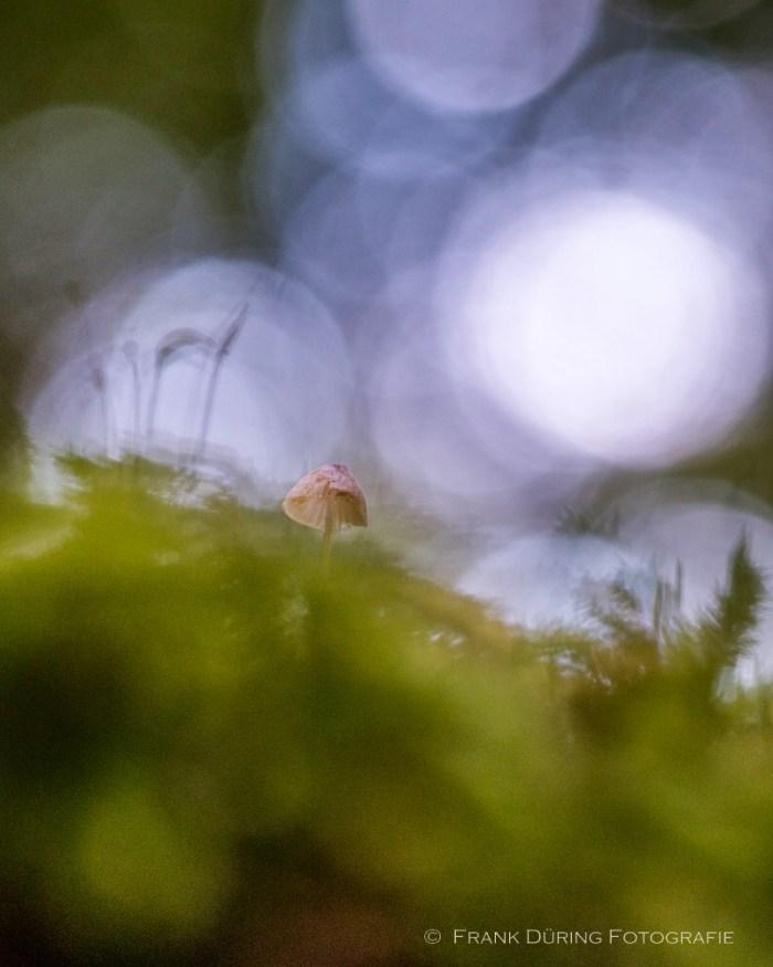 Pilze, Mühlenbusch Dormagen, Makro