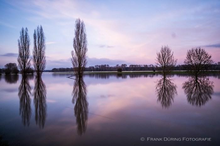 Hochwasser, Rhein, NSG Grind