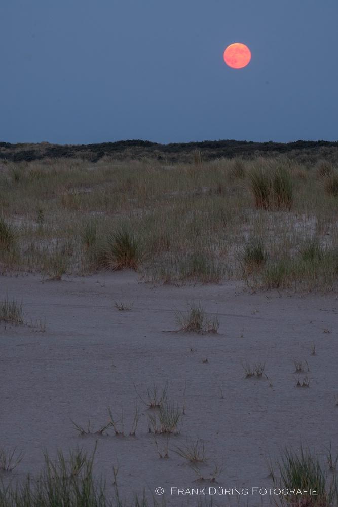 Roter Vollmond, Ballumer Dünen, Ameland, NL