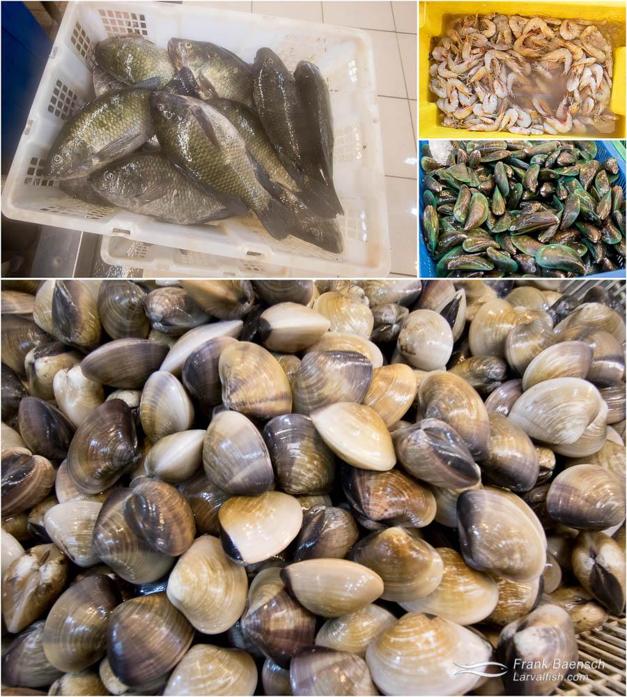 Recommended seafoods. TL: Common locally farmed tilapia. TR: Yellow prawns (Metapenaeus brevicornis). Farmed. MR: Green glauconomya mussel (Glauconome virens). B: Asiatic softshell clam (Cryptomya elliptica).