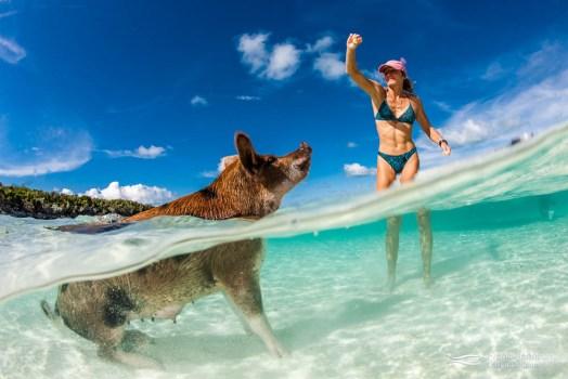 Girl feeds swimming pig in the Exumas, Bahamas.