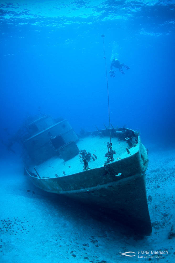 Diver descends down onto wreck in the Bahamas.