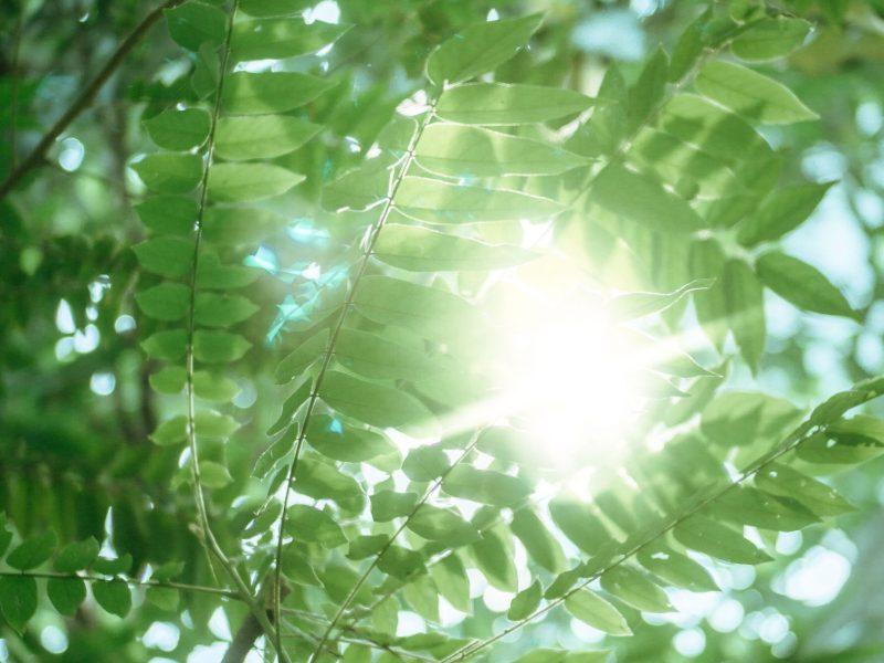 Foto von Blättern