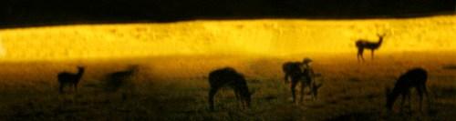 Deer Caught in the Quantum Wobble