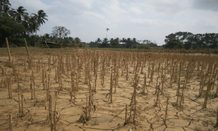 Drought farm