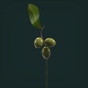 olives2render.526