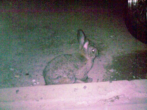 Photo of Rabbit at the mosque