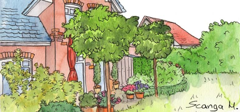 Sichtschutz - Illustration - Franks kleiner Garten