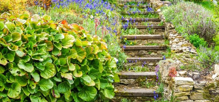 Stauden - Treppe - Franks kleiner Garten