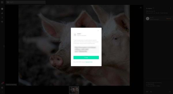 Schweine by Frank Sonnenberg