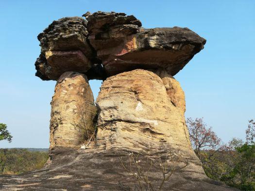 grote rots harde hanen