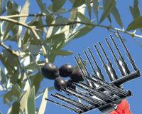 Abbacchiatore olive elettrico  attrezzature olearie