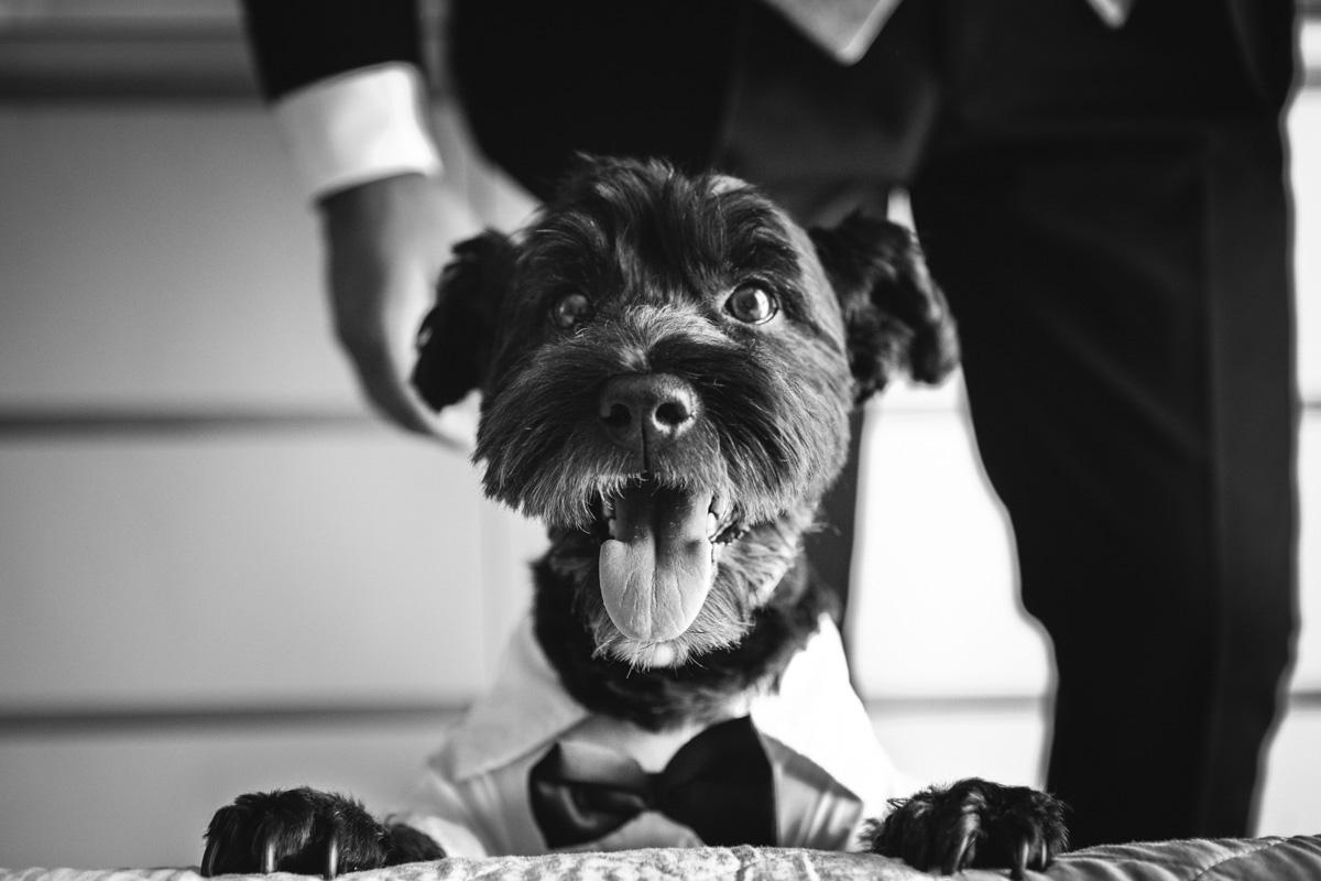 Reportajes de Boda con Mascotas