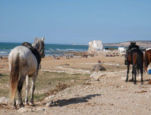 Marokko mit dem Campervan - Sidi Kaouki