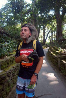 makaken angriff monkey forest 05