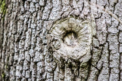 funky trees