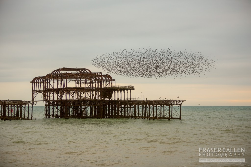 Brighton starling murmuration