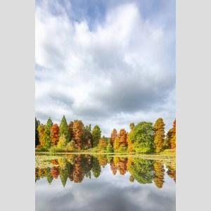 Bedgebury Reflections