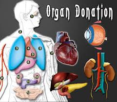 Can Parsis donate organs or the body after death?