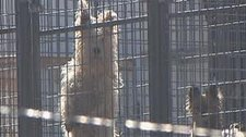 pet in prison