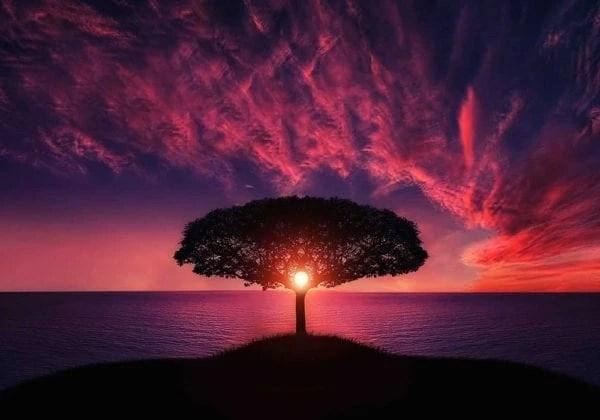 Frasi sulla Bellezza della Natura le 40 pi significative