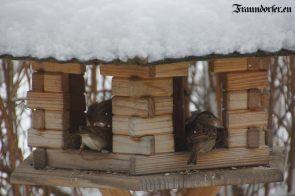Flashback 2012 - Vögel im Winter