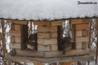 Flashback 2012 - Vögel