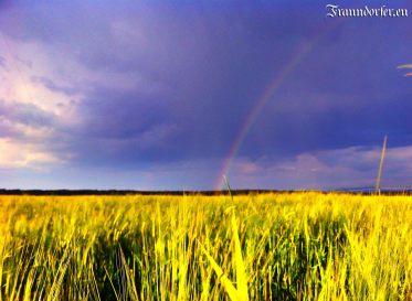 Flashback 2012 - Regenbogen