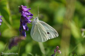 Flashback 2012 - Schmetterling an der Blüte