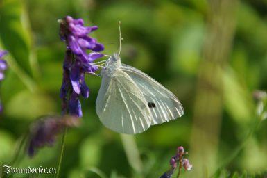 Flashback 2012 - Schmetterling