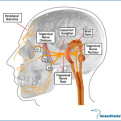 Trigeminal Nerve Diagram Leviton Slide Dimmer Wiring Anaesthesia Uk Anatomy Of The Figure Gasserion Ganglion