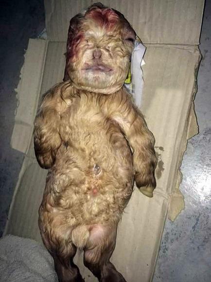 Half goat human hybrid found | Freak Lore - photo#9
