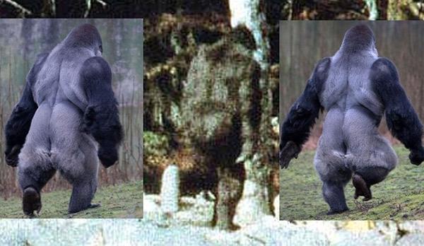 Bigfoot Film