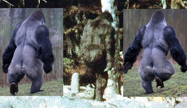 bigfoot compared