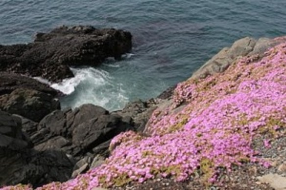 rocks-near-lighthouse