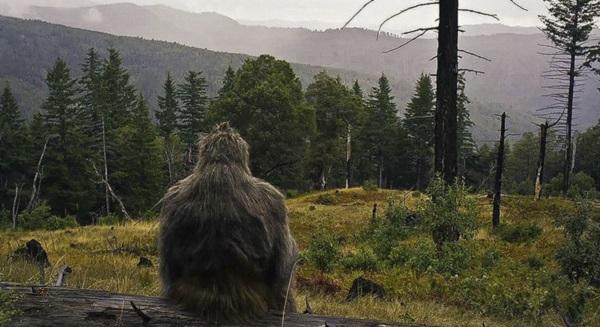 bigfoot-on-log