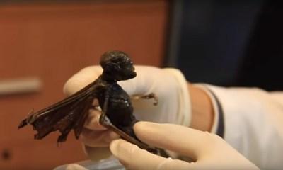 dark fairy corpse
