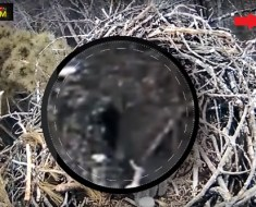 eagle-cam-capture-bigfoot