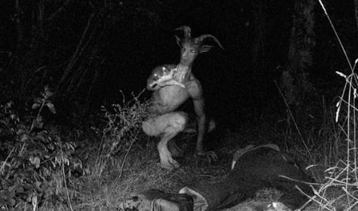 Goat Man found in woods