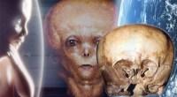 starchild skull alien origin