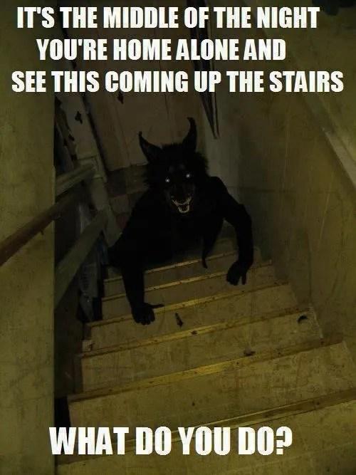 Werewolf on stairs meme